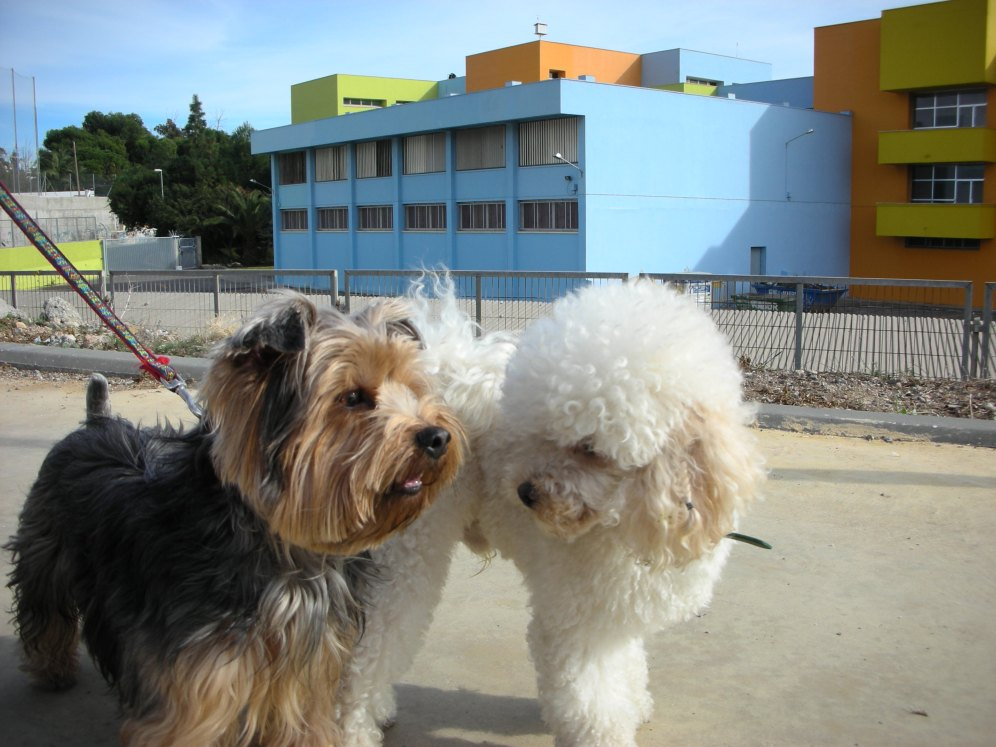 Pegote y Chispa
